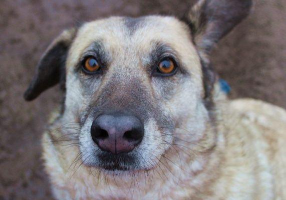 Patenhund Krecik: Krecik ist ein aktiver, freundlicher Hund, mittelgroß und etwas unförmig gebaut. Daher wird er auch immer übersehen. Krecik wurde ausgesetzt und in Frau Wandas Tierheim gebracht.