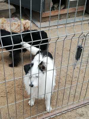 Patenhund-Nitka